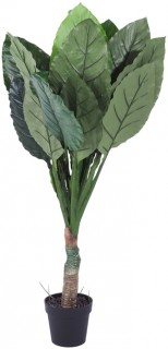 Eden-Potted-Big-Spathe-130-cm on sale