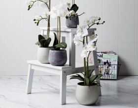 30-off-NEW-Emporium-Potted-Butterfly-Orchids on sale